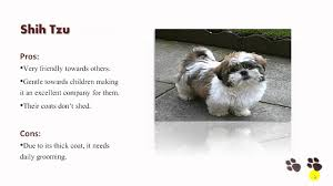 Non Shedding Small Dogs Australia by Smalldogsusa Discover The Secret Lives Of Small Dogs