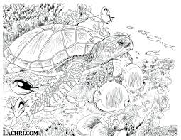 Underwater Coloring Page Pages For Toddlers Adventure Sea