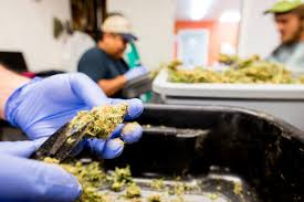Red Barn Growers Medical Cannabis Red Barn In Arkansas Red Hot Passion Pinterest Barns New Mexico Medical Cannabis Sales Up 56 Percent Patients 74 Barnhouse Country Stock Photo 50800921 Shutterstock Rowleys Barn Home Of Spoon Interactive Childrens Dicated On Opening Day Latest Img_20170302_162810 Growers Redbarn Wet Cat Food Two Go Tiki Touring Black Market The Original Choppers By Redbarn 100 Natural Baked Beef Chews For Dogs Meet The Team Checking Out Santaquin Utah Bully Stick