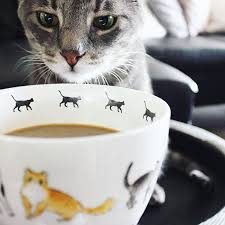 cat coffee coffee geekio coffee on instagram lina tomasetti of kitties n coffee