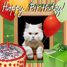 Happy Birthday With Cat Animated Pic