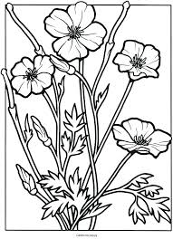 California Poppy Coloring Page Drawing Of Kids Play Color Purple Golden Flower Co