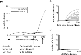 A Model To Assess The Efficacy Of Vaccines For Control Liver Fluke Infection