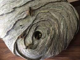 best 25 wasp nest removal ideas on bug killer