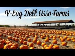 Wheatland California Pumpkin Patch by Dell Osso Farms Pumpkin Patch Vlog Youtube
