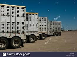 100 Cattle Truck CATTLE TRUCKS LINED UP AT CATTLE AUCTION AFTER BRINGING IN CATTLE