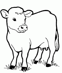 Cow Animals Coloring Pages For Kids