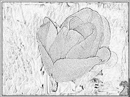 Les Ufs Et Les Tulipes De Pâques Dans Un Panier En Osier Dans Le