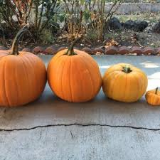 Pumpkin Patch Santa Rosa by Eastside Seasonal Farm 10 Photos Local Services 5834