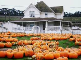 Pumpkin Patch Santa Rosa by Peter Pumpkin Patch California Haunted Houses