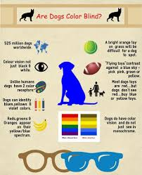 Are Dogs Color Blind The Question ly A Dog Could Answer