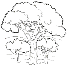 Coloring Sheets Image Photo Album Coloring Pages Of Trees At