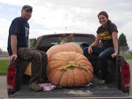 Atlantic Giant Pumpkin Record by Fall Follows Fame Sort Of For Worland Giant Pumpkins