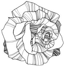 Nicole Illustration Flower Power Rose Coloring Page Colouring