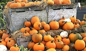 Portland Maine Pumpkin Patch by Corn Maze Or Haunted Maze Portland Pumpkin Farm Groupon
