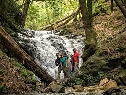 Uvas Canyon Waterfalls Memory Lane