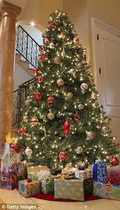 Fraser Christmas Trees Uk by How To Pick The Perfect Christmas Tree Daily Mail Online