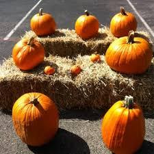 Pumpkin Patch Houston Tx Area by Pumpkin Patch San Antonio Pumpkin Patches 8756 Hwy 151 San