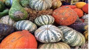 Pick Of The Patch Pumpkins Santa Clara by Pumpkins Zombies And More Football Get On Board