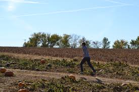 Eckerts Pumpkin Patch St Louis Mo by Junior Collin Trower Runs Through The Pumpkin Patch Mbu Timeline