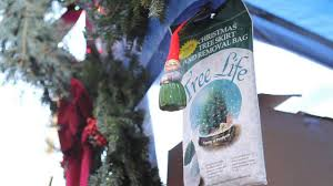 Rite Aid Christmas Tree Stand by A Tree Sells In Brooklyn A Canadian Christmas Tree Vendor In
