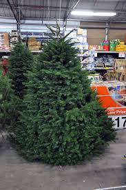 Christmas Tree Removal Bag Home Depot Endearing Pleasing Amazing Cute Beautifull Alluring Super Sweetlooking Lovely Shining