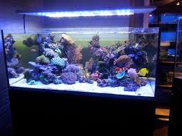 eclairage led pour aquarium eau de mer recifal eclairage led le coin des bricoleurs