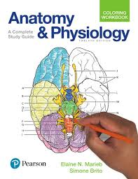 Anatomy And Physiology Coloring Workbook A Complete Study Guide 12th Edition Marieb Brito