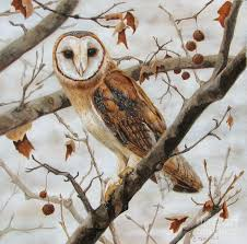 Subtle Elegance-barn Owl Canvas Print / Canvas Art By Catherine ... Usda Studying Iowa Rodents For Avian Flu Public Radio Subtle Elegancebarn Owl Canvas Print Art By Catherine Dubuque County Part Of Barn Owl Boom As Orphaned Owlets Find Home J Thaddeus Ozarks Cookie Jars And Other Larks Love These Meeces Deer Mice Mouse Control Rats New York Stock Photos Images Alamy Barn Cat Traing To Hunt Mice Youtube Tyto Alba Family Tytonidae Parent Bird Bring Its Removal Houston Dallas Fworth 911 Wildlife
