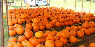 Pumpkin Patch Near Pensacola Fl by 2014 January Northescambia Com