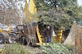 Christmas Tree Cutting Permits Colorado Springs by Co Horts 2016