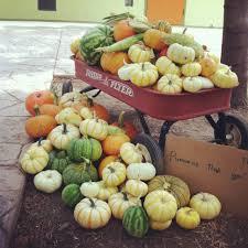 Natural Fertilizer For Pumpkins by The Perfect Pumpkin Patch Hope Gardens