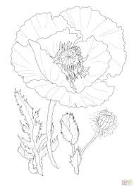 California State Flower Coloring Page Adult Poppy From Trolls Printable Pretty To Print Flowers Tree