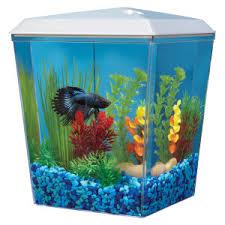 top fin皰 bettascene 1 aquarium petsmart starting with a small