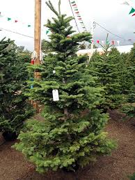 Tannenbaum Christmas Tree Farm Michigan by Collection Christmas Tree Kinds Pictures Amazows Flowers