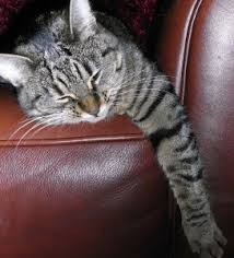 7 Simple Tricks How To Keep Cats f Furniture