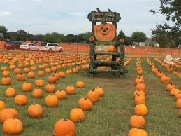 Pumpkin Patch Fort Worth Tx by 8 Top Pumpkin Patches In Texas Tripstodiscover Com