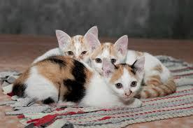 popular cat names the 10 trendiest cat names of 2012 catster