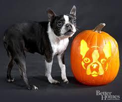 Ohio State Pumpkin Stencils Free by Free Favorite Dog Breeds Pumpkin Stencils U2013 Deaf Dogs Rock