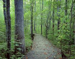 Spirit Halloween Raleigh Nc Hours by 10 Hikes Kids Enjoy In The Triangle