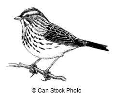 Sparrow Clipart and Stock Illustrations 4 040 Sparrow vector EPS