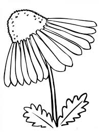 Chamomile Flower Coloring Pages 17