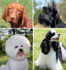 List Of Dogs That Shed Hair by Coat Dog Wikipedia