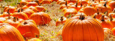 Best Pumpkin Patch Near Roseville Ca by The Best Of Apple Hill Ca