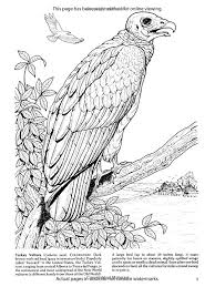 Birds Of Prey Adult Colouring Book