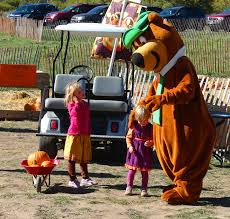 Pumpkin Patches Around Colorado Springs by Colorado Pumpkin Patch And Yogi Bear Colorado Pumpkin Patch