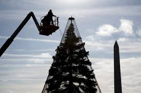 Seattle Christmas Tree Disposal 2015 by Major Traffic Congestion Expected For Christmas Tree Lighting Near