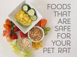 Can Bunny Rabbits Eat Pumpkin Seeds by A List Of Safe And Dangerous Foods For Your Pet Rat Pethelpful