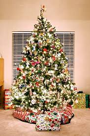 Types Of Christmas Trees To Plant by Christmas Traditions Wikipedia