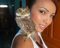 Can You Have A Barn Owl As A Pet 55 Best Owl Images On Pinterest Barn Owls Children And Hunting Owls How To Feed Keep An Owlet Maya A Brief Introduction The Common Types Of Six Reasons Why You Dont Want An Owl As Pet Bird Introducing Gizmo Baby Whitefaced Youtube 2270 Animals 637 Oh Meine Uhus I Love Owls My Barn Cat Baby By Disneyqueen1 Deviantart All Things Nighttime Predator Cute Animals